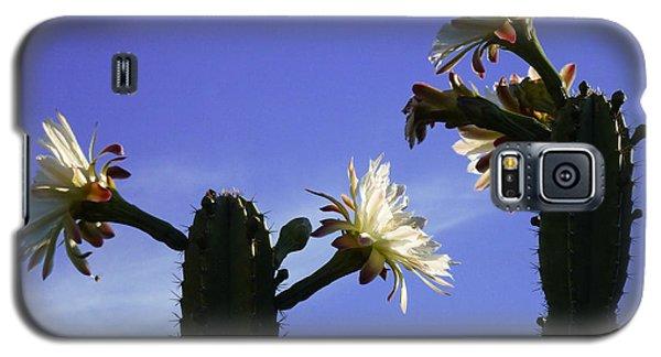 Flowering Cactus 4 Galaxy S5 Case by Mariusz Kula