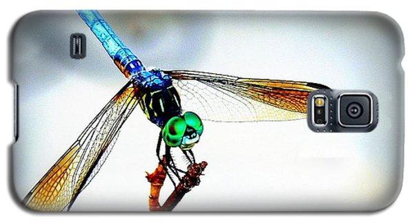 Fly Dragon Galaxy S5 Case