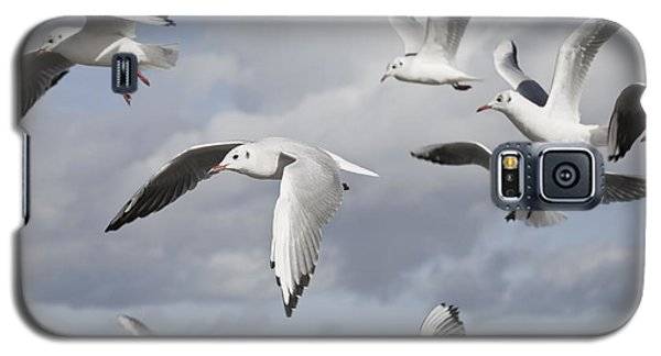 Flying Seagulls Galaxy S5 Case