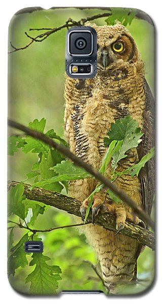 Forest King Galaxy S5 Case