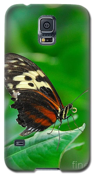 D5l15 Butterfly At Franklin Park Conservatory Galaxy S5 Case
