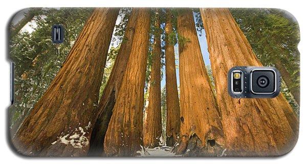 Giant Sequoias Sequoia N P Galaxy S5 Case