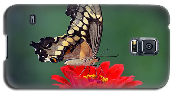 Galaxy S5 Case featuring the photograph Giant Swallowtail by Rodney Campbell