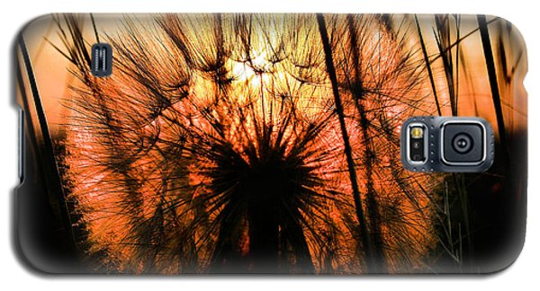 Going To Seed Galaxy S5 Case by Steven Reed