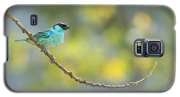 Golden-naped Tanager Galaxy S5 Case