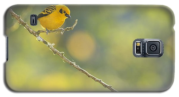 Golden Tanager Galaxy S5 Case