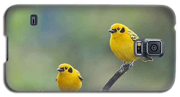 Golden Tanagers Galaxy S5 Case