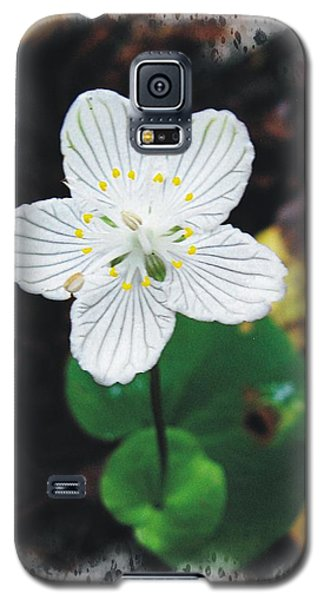 Grass Of Parnassus Galaxy S5 Case