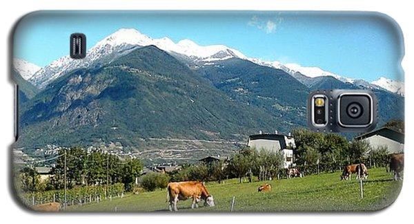Grazing Cows  Galaxy S5 Case by Giuseppe Epifani