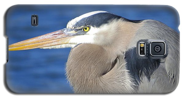 Galaxy S5 Case featuring the photograph Great Blue Heron Profile by Phyllis Beiser