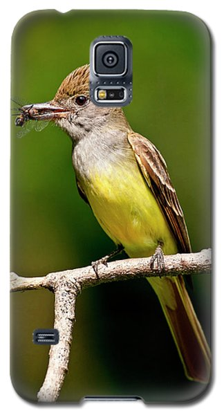 Great Crested Flycatcher Myiarchus Galaxy S5 Case