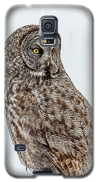 Great Grey Galaxy S5 Case by Yeates Photography