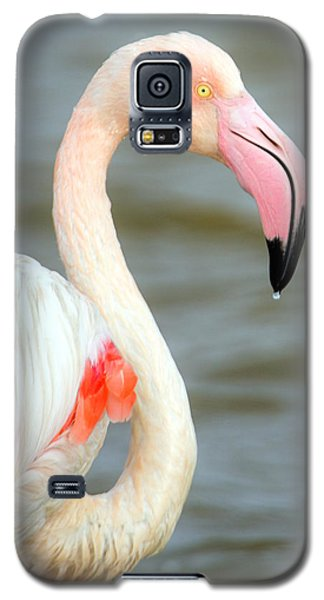Greater Flamingo Phoenicopterus Roseus Galaxy S5 Case by Panoramic Images