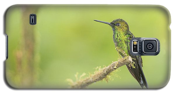 Green-crowned Brilliant Hummingbird Galaxy S5 Case