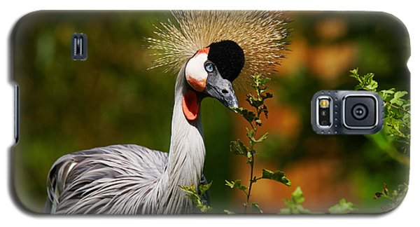 Galaxy S5 Case featuring the photograph Grey Crowned Crane by Nick  Biemans