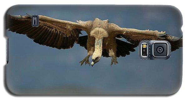 Griffon Galaxy S5 Case - Griffon Vulture Flying by Nicolas Reusens