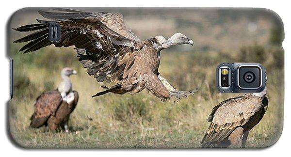 Griffon Vultures Galaxy S5 Case