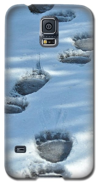 Grizzly Bear Tracks Galaxy S5 Case