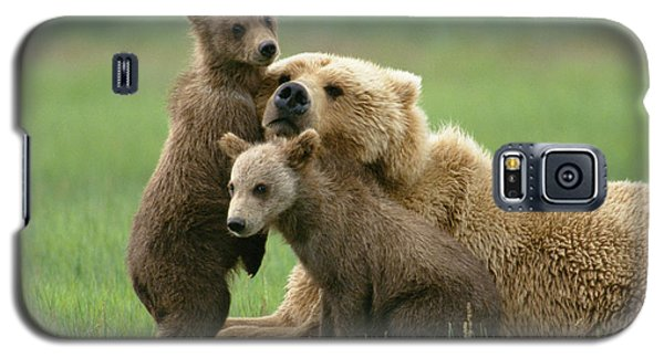 Grizzly Cubs Play With Mom Galaxy S5 Case