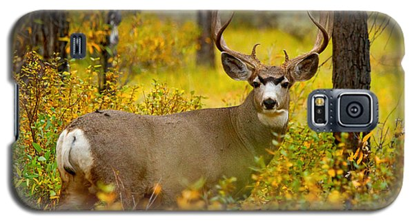 Galaxy S5 Case featuring the photograph Gros Ventre Buck by Aaron Whittemore