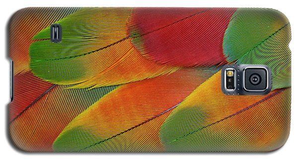 Harlequin Macaw Wing Feather Design Galaxy S5 Case by Darrell Gulin