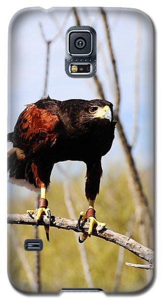 Harris's Hawk Galaxy S5 Case by Bonnie Fink
