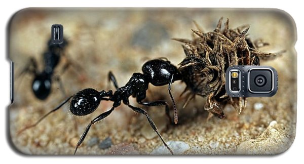 Ant Galaxy S5 Case - Harvester Ant by Frank Fox