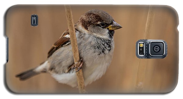 House Sparrow Passer Domesticus Galaxy S5 Case