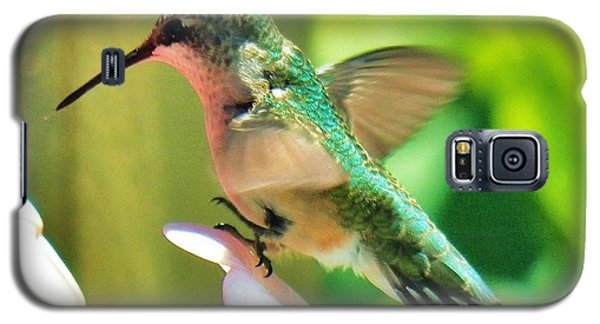 Galaxy S5 Case featuring the photograph Hummingbird 3 2014 by Judy Via-Wolff