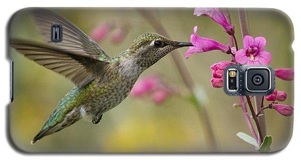 Hummingbird Heaven  Galaxy S5 Case
