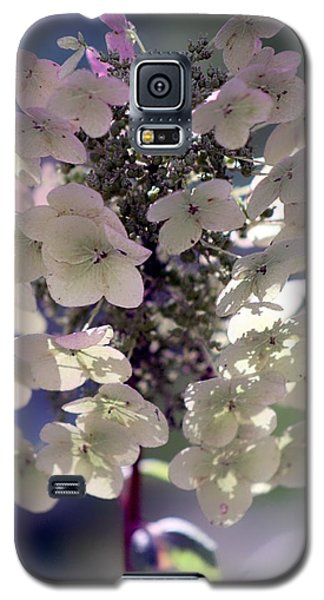 Galaxy S5 Case featuring the photograph Hydrangea  by Debra Forand