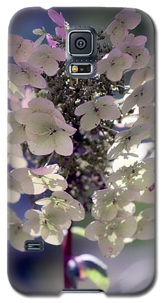 Hydrangea  Galaxy S5 Case by Debra Forand