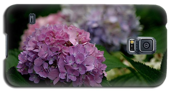 Hydrangea Galaxy S5 Case by Living Color Photography Lorraine Lynch