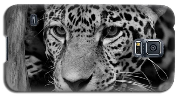 Jaguar In Black And White II Galaxy S5 Case by Sandy Keeton
