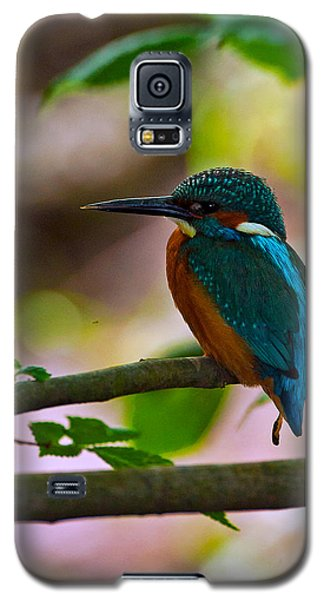 Kingfisher Galaxy S5 Case by Paul Scoullar
