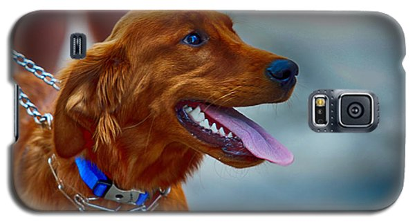 Galaxy S5 Case featuring the photograph Labrador Retriever by Jerome Lynch