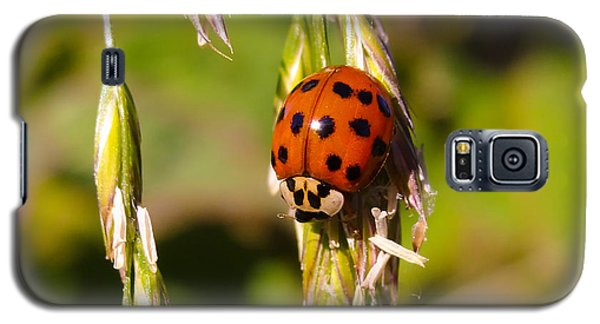 Galaxy S5 Case featuring the tapestry - textile Lady Bug by Dennis Bucklin