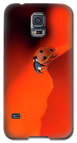 Ladybug Galaxy S5 Case - Lady In Red by Jacky Parker
