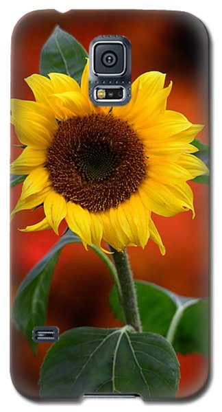 Last Sunflower Galaxy S5 Case