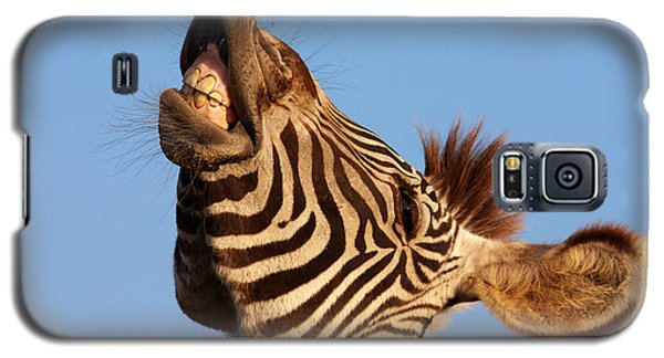 Laughing Zebra Galaxy S5 Case by Nick  Biemans