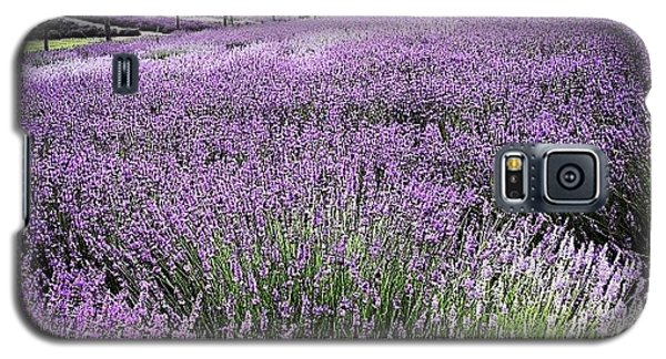 Color Galaxy S5 Case - Lavender Farm Landscape by Christy Beckwith