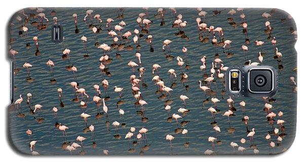 Lesser Flamingo, Lake Nakuru, Kenya Galaxy S5 Case by Panoramic Images