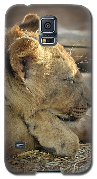 Lion Cub Dozing In The Sun Galaxy S5 Case