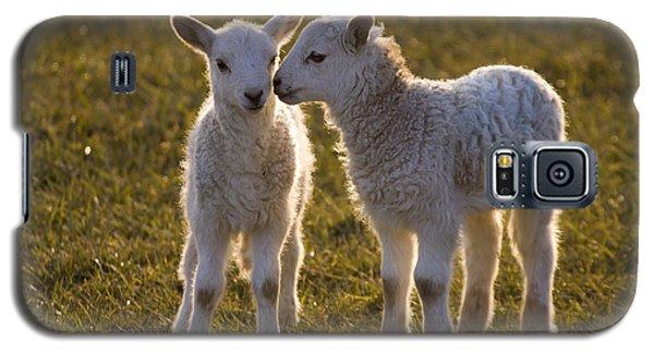 Sheep Galaxy S5 Case - Little Gossips by Angel Ciesniarska