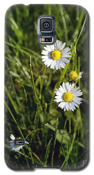 Little White Daisies Galaxy S5 Case