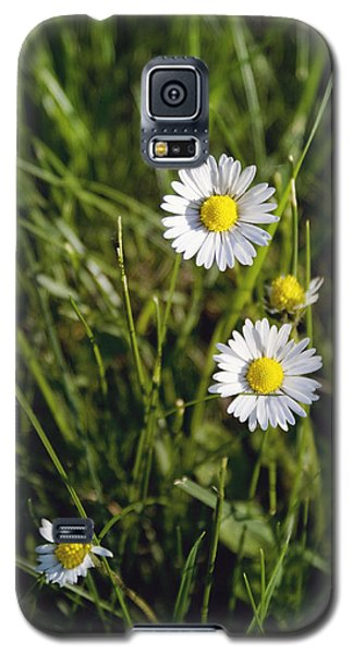 Little White Daisies Galaxy S5 Case