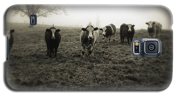 Cow Galaxy S5 Case - Livestock by Les Cunliffe