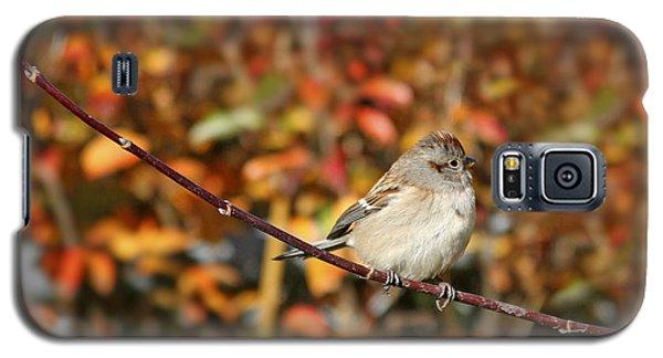 Lone Sparrow Galaxy S5 Case
