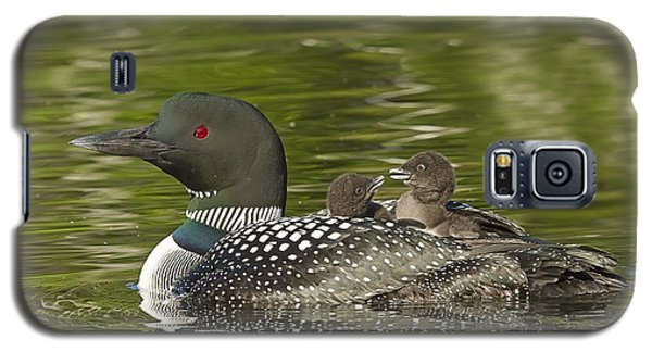 Loon Parent With Two Chicks Galaxy S5 Case