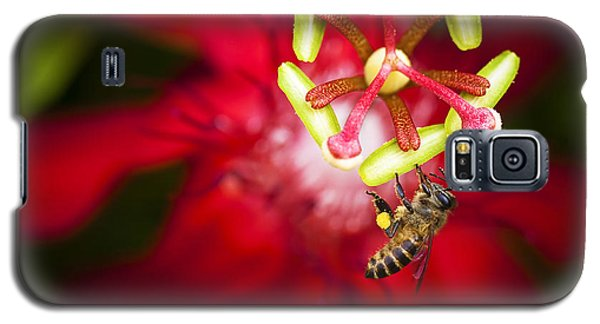 Galaxy S5 Case featuring the photograph Macro Photograph Of A Bee Collecting Pollen. by Zoe Ferrie